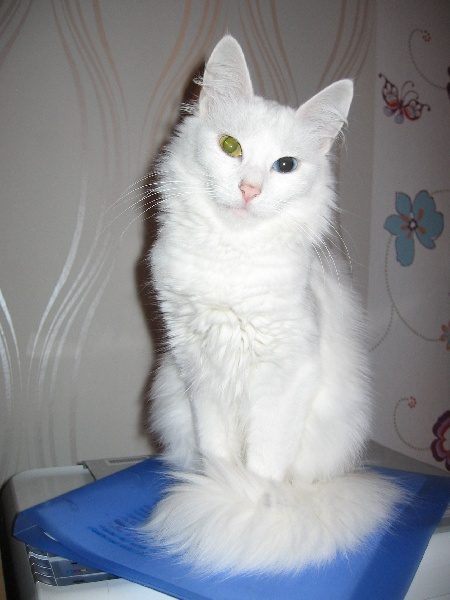 Chat val doise